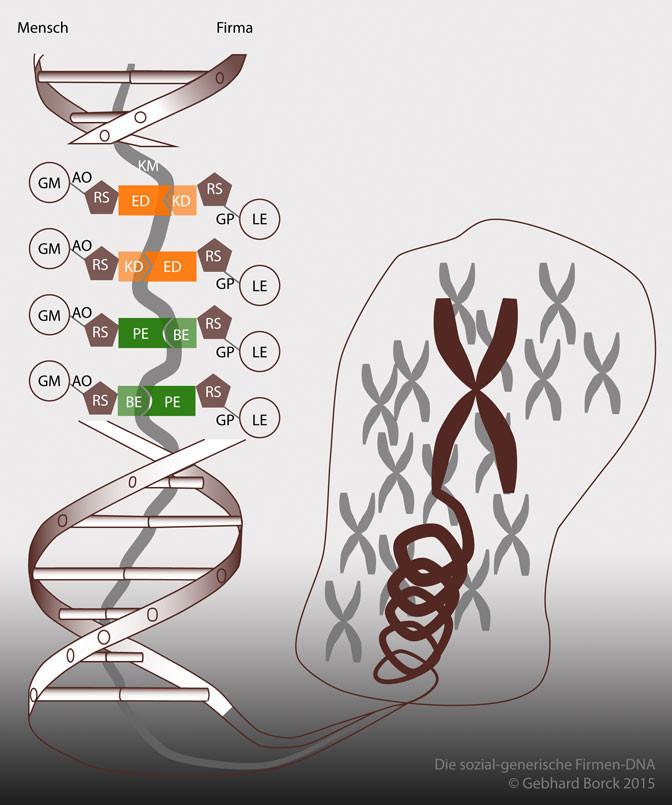 Firmen-DNA, Copyright Gebhard Borck