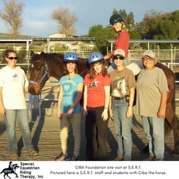 Ciba the horse2.png