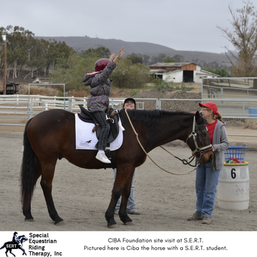 Ciba the horse.png