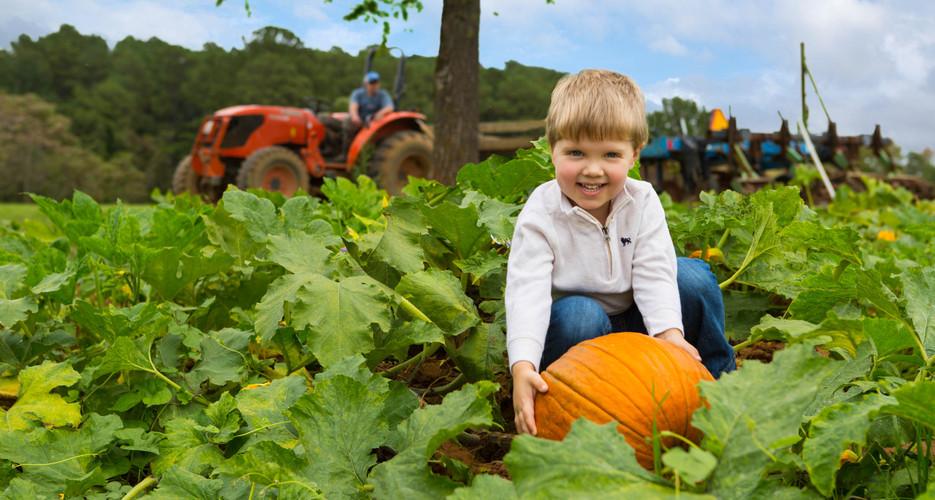 Pumpkin-21.jpg