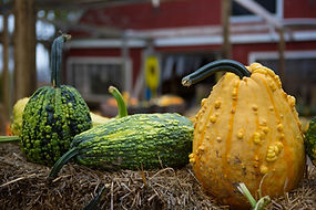 Pumpkin-10.jpg