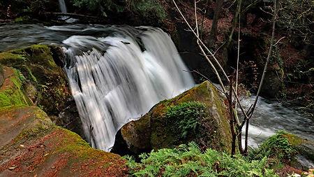Noggin Branding Photography - Whatcom Falls Park Bellingham