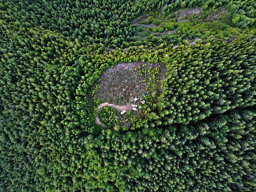 Forest Drone Birds Eye View