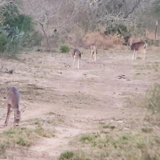 Deer6.jpeg