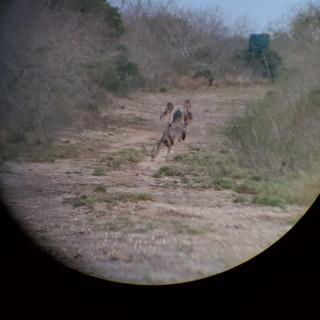 Deer4.jpeg