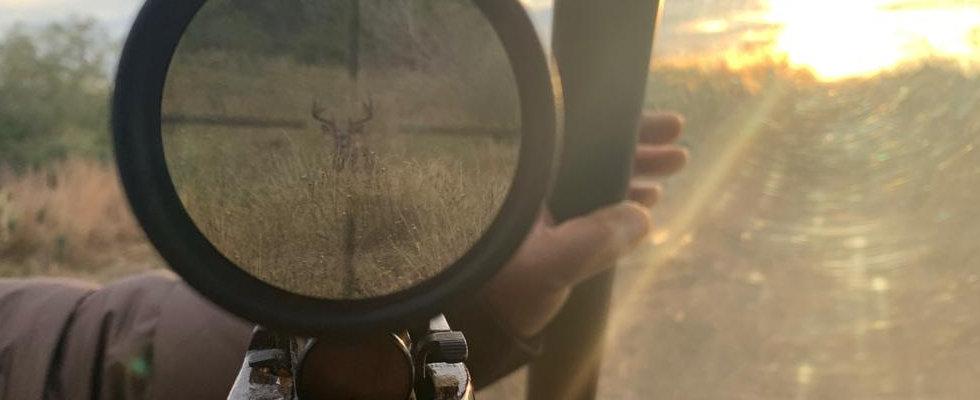 Deer7.jpeg