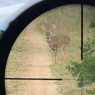Deer12.jpeg