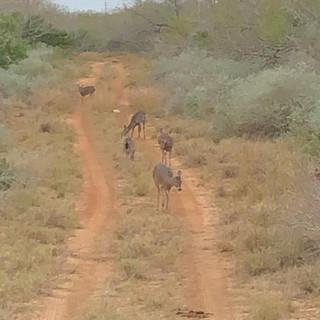 Deer11.jpeg