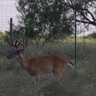 Deer1.jpeg