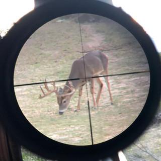 Deer8.jpeg