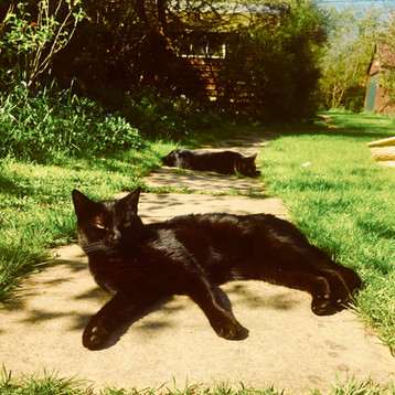 Lounging in the garden