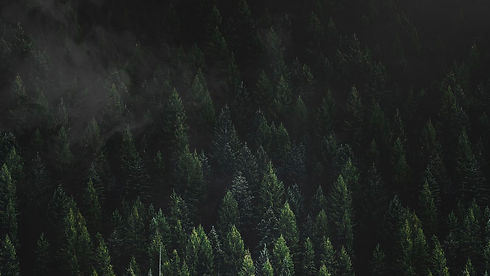 2020_TREE_BACKGROUND.jpg