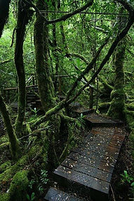 creepy crawly trail Tasmania.jpg