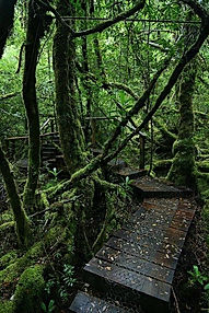 creepy crawly trail Tasmania.jpg