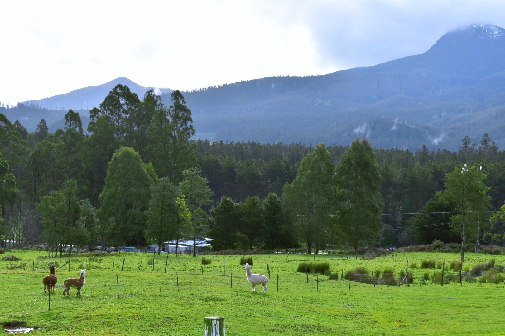 Cabin View of Alpaca Fields & Forest