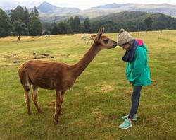 Curious Bambi
