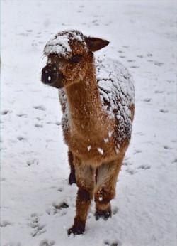Joyful in the Snow