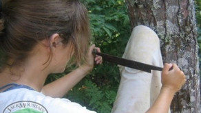 Making Buckskin Part I: The 3 most important steps before brain tanning