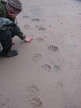 Animal Tracking Workshop