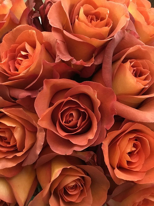 Red Moon Rose Dozen