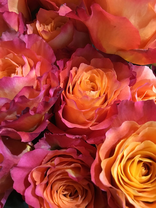 Sunrise Petali Rose Dozen