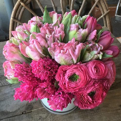 Tulipano di Canto