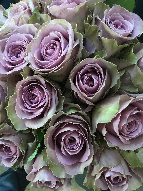 Arcturus Rose Dozen
