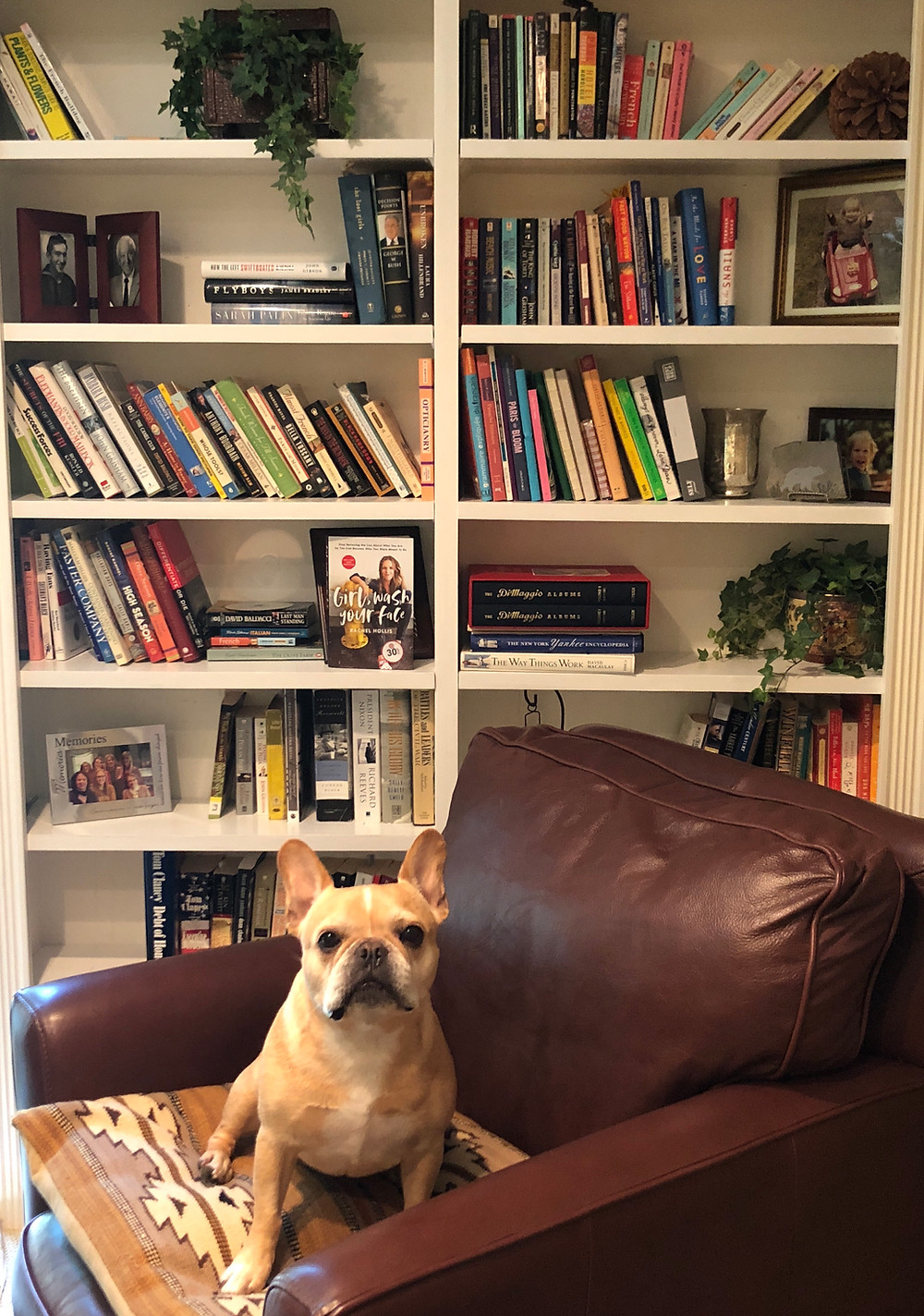 French bulldog library books to read
