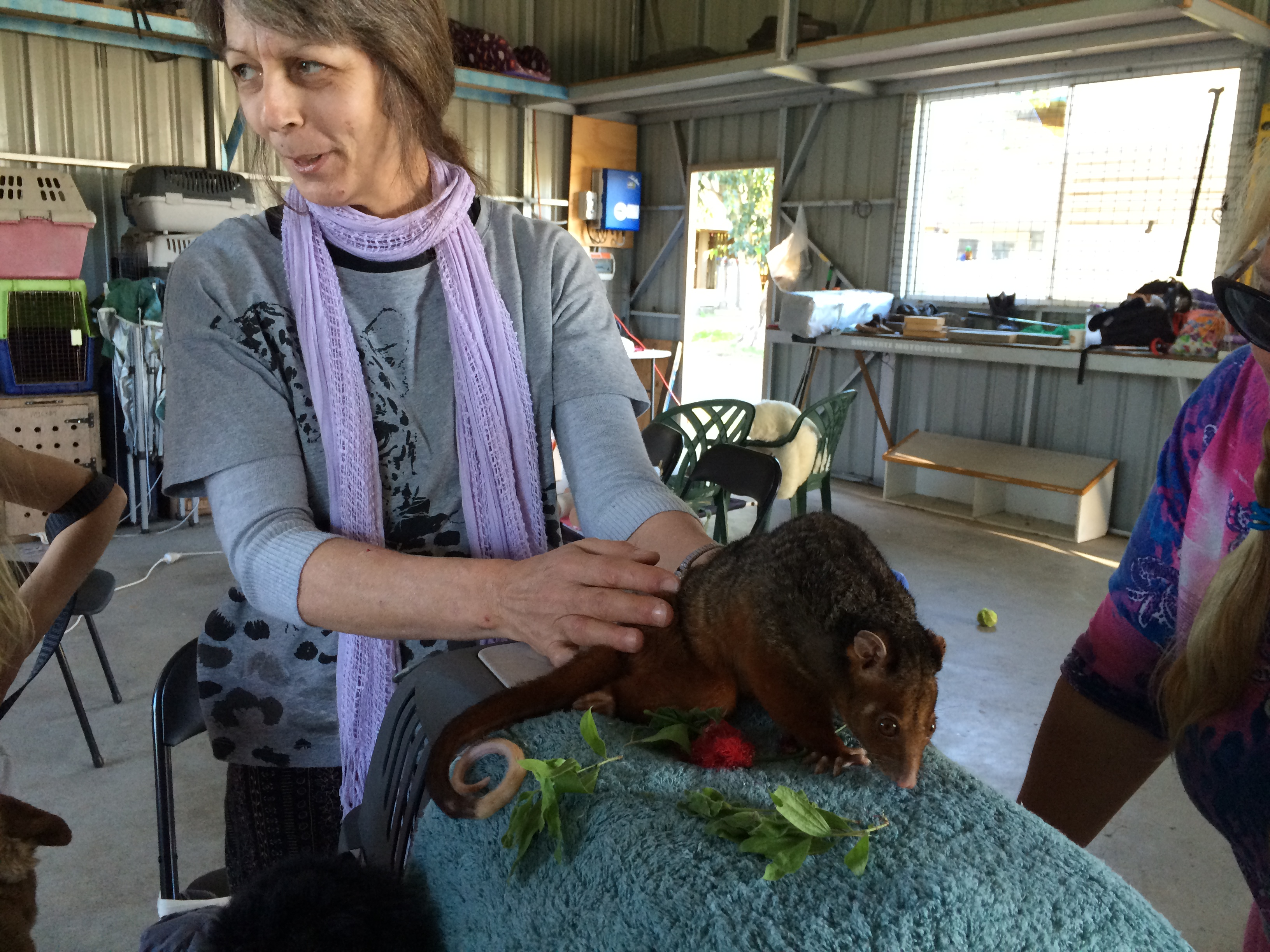 Access for Animals Hervey Bay