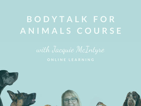 2021 final dates to take BodyTalk for Animals Course with me.