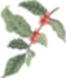 Leaf_intro_right.a9827866.png
