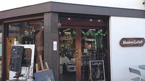 the Bluebird cafe