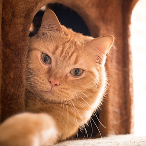 Campaign - Save the Cat Museum