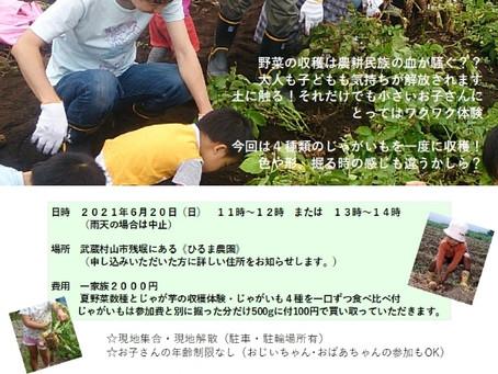2021ジャガイモ収穫体験