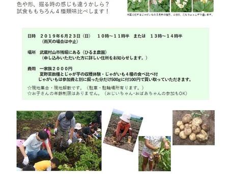 ジャガイモの収穫体験