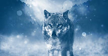 wolf-1836875_640.jpg