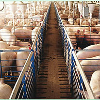 veterinarias-270x270.jpg