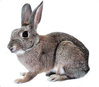 hase_frei.png