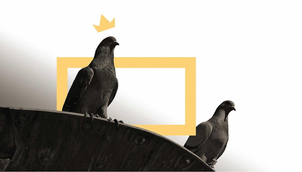 PGK-Background(Pigeons).jpg