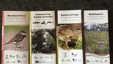 Super Cool Flyers on Birds, Reptiles, Flowers & Fish of the Mitta and Alps
