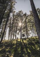 Waldlandschaft in Lindau ( Kunde_ Landra
