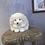 Thumbnail: Festive White Bristle Hedgehog