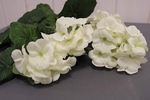 White Carnation Flowers