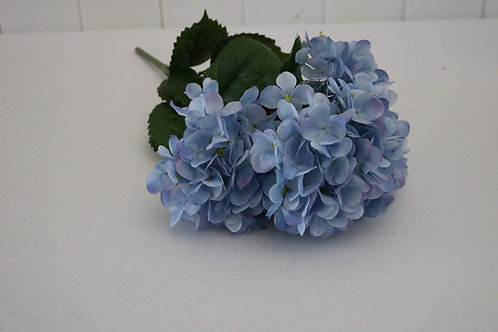 Blue Carnation Flowers