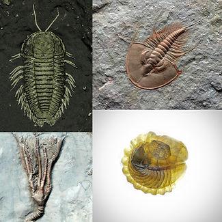 fossilicon.jpg