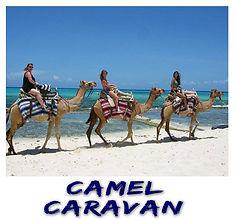 Camel Caravan | Cancun Tours & Adventure