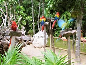 Parque-Xcaret-Guacamayas-.jpg