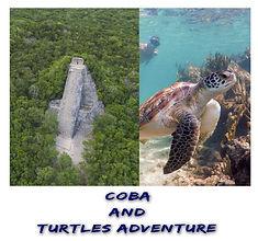 Coba & Turtles Adv Polaroid.jpg