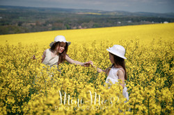Rapeseed  Photography Hampshire