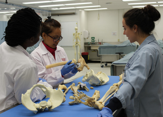 Anatomy Workshop - Human Anatomy Laboratory Update